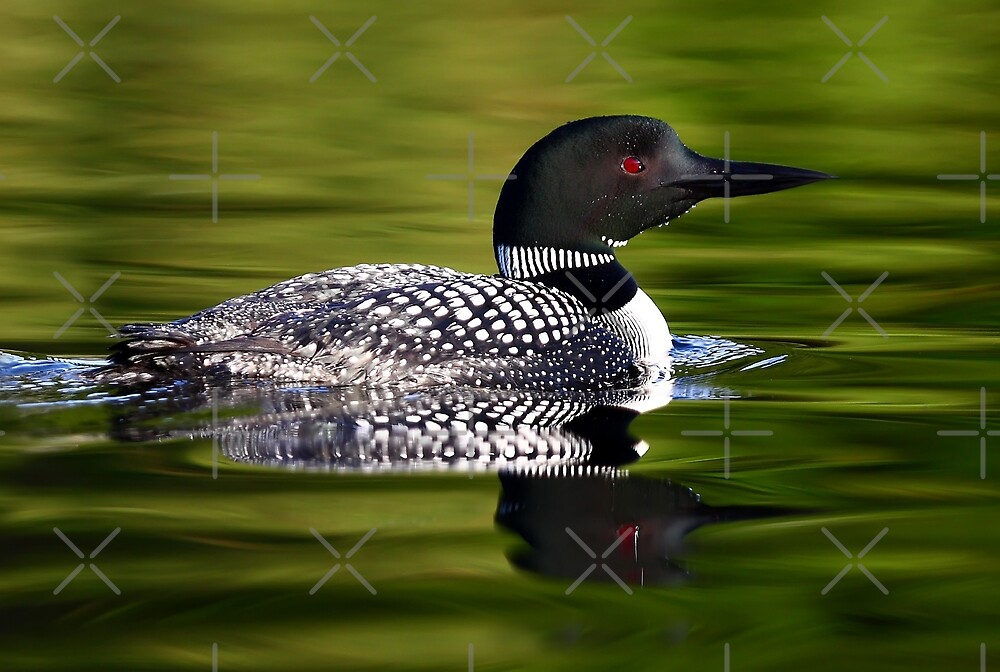 Calming Greens - Common Loon by Jim Cumming