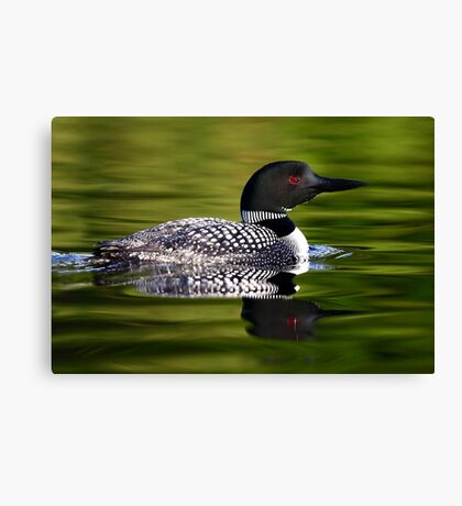Calming Greens - Common Loon Canvas Print