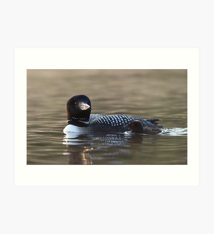 Common loon with chick Art Print