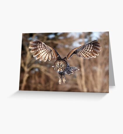 Great Grey Owl swoops down Greeting Card