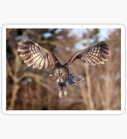 Great Grey Owl swoops down Sticker