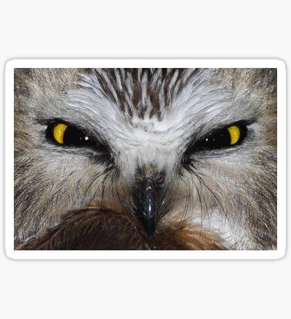 Saw-whet Owl...Saw-eeet! Sticker