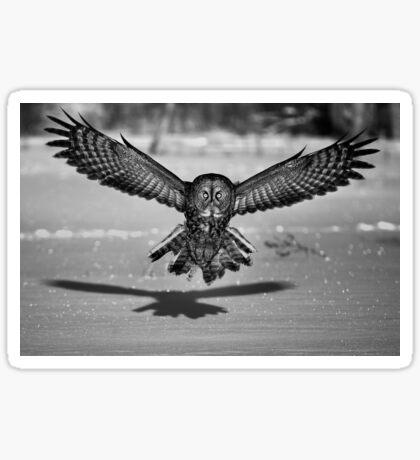 Great Grey Owl B&W Sticker