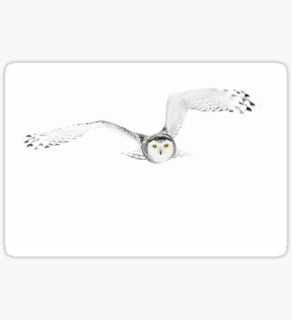 Eyes on the prize - Snowy Owl Sticker