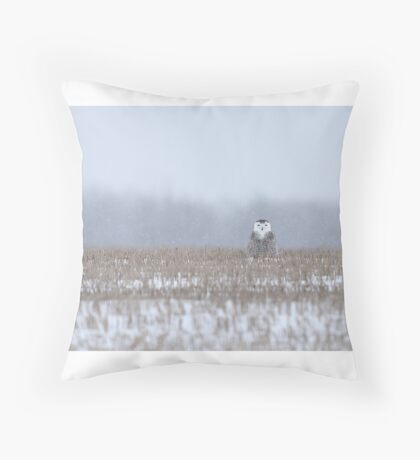 Snowy Owl - peek a boo! Throw Pillow