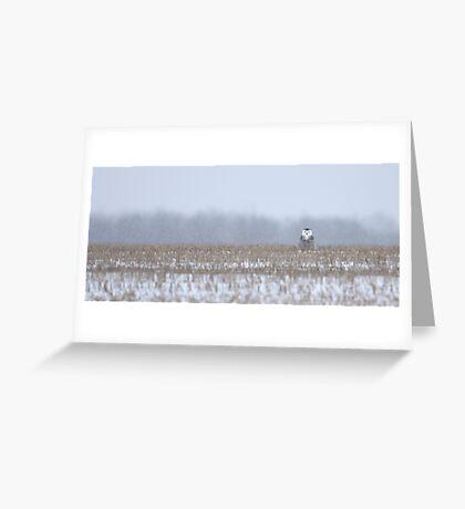 Snowy Owl - peek a boo! Greeting Card