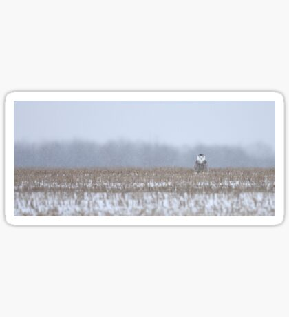 Snowy Owl - peek a boo! Sticker