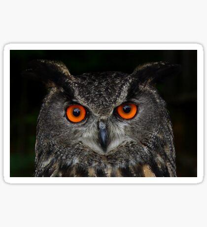 Eurasian Eagle-Owl Sticker