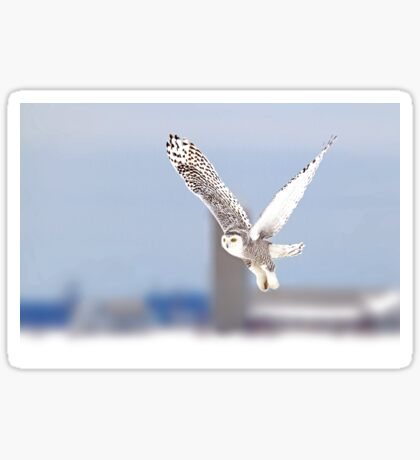 Along a country road - Snowy Owl Sticker