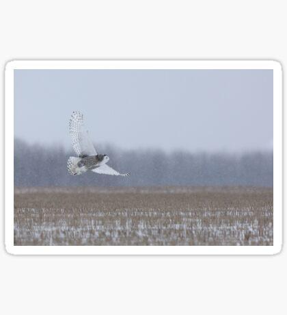 Snowy Owl takes flight Sticker