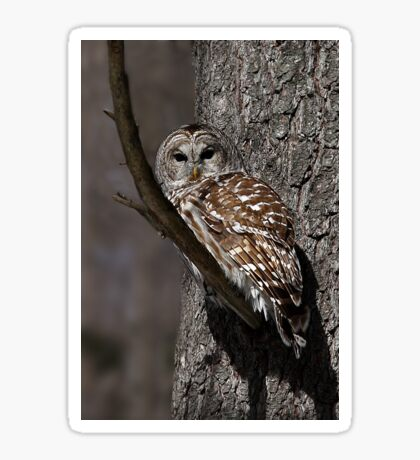 Barred Owl - Low, Quebec Sticker