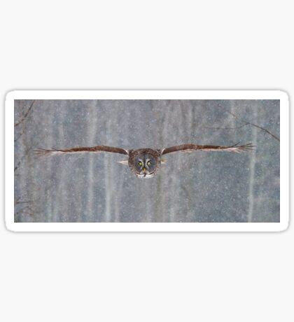 Full speed - Great Grey Owl Sticker