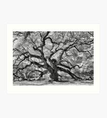 Angel Oak Art Print