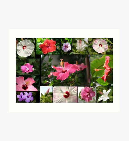 Say Hi to Hibiscus Art Print
