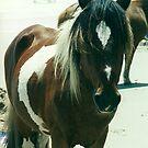 wild horses 1 by steveschwarz