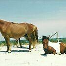 two ponies by steveschwarz
