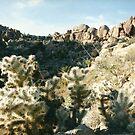 cactus and rocks by steveschwarz
