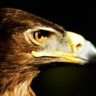 Eagle Eye - Steppen Eagle Profil von Jay Lethbridge
