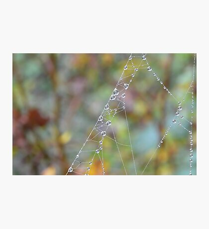 Silky Strands with Dew Photographic Print