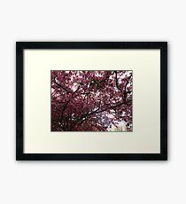 Appreciating the splendours of Spring Framed Print