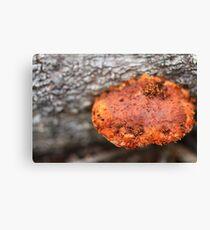Fungi Canvas Print