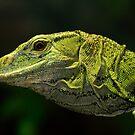 Dragon by zzsuzsa