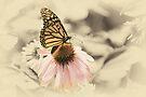 Monarch Memories by KBritt