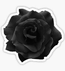 Single Large High Resolution Black Rose. Sticker