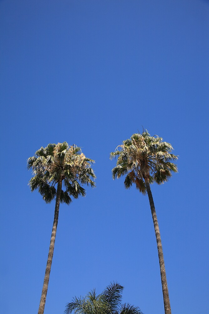 Palm Trees by Frank Romeo