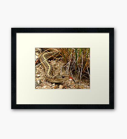 Scary Surprise Framed Print