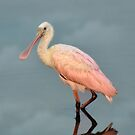 Roseate Spoonbill Youngster by Kathy Baccari