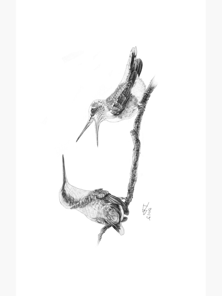 Ruby-Throated Hummingbird: Mother and Chick, 2012, Pencil by LaughingMantis