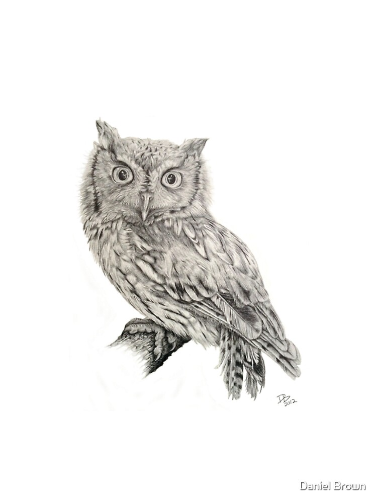 Eastern Screech Owl (Megascops asio), 2012, Pencil by LaughingMantis