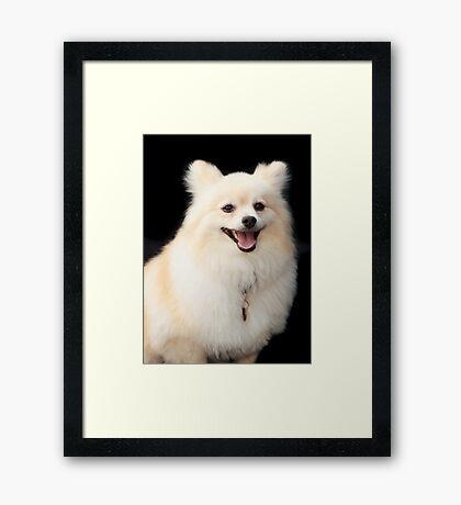 Rex ~ Framed Print