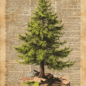 Pine Tree,Cedar Tree,Forest,Nature Dictionary Art,Christmas Tree by DictionaryArt