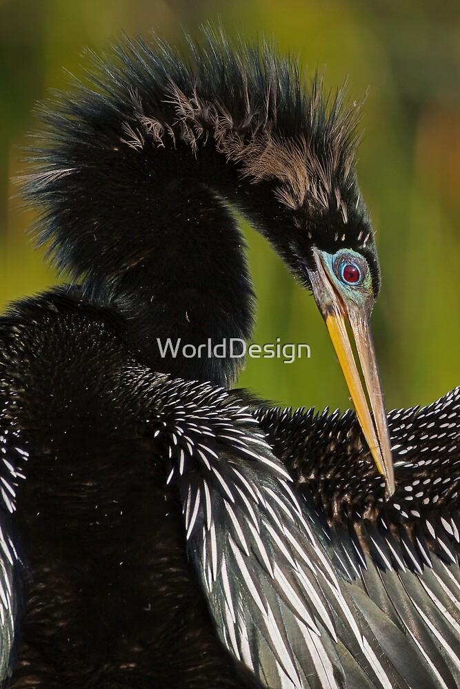 Avian Elegance by WorldDesign