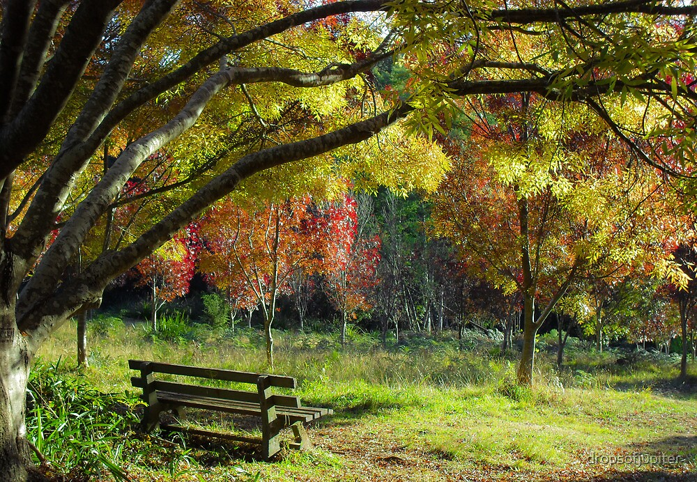 Autumn by Louise Delahunty