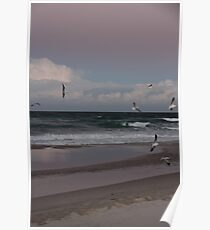 Seagull Sunset Gold Coast Poster