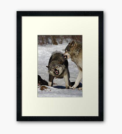 Back off! - Timber Wolf Framed Print