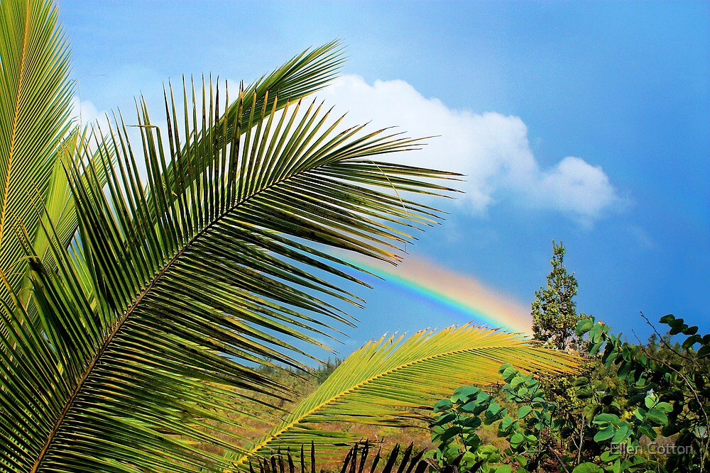 Tropical Rainbow by Ellen Cotton