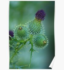 Prickly Bracts Poster
