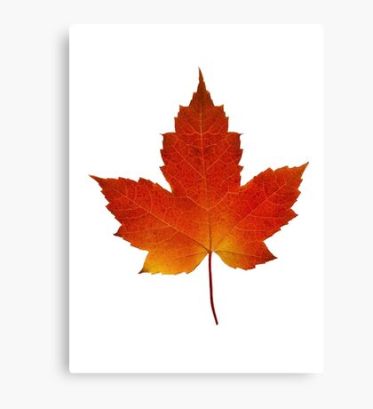 Maple Leaf - Algonquin Park, Canada Canvas Print