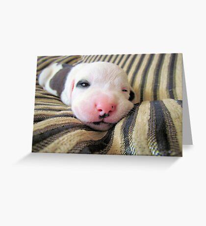 Irresistible~  Greeting Card