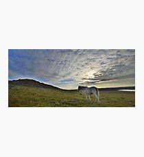 Cornwall: Lone Pony Photographic Print