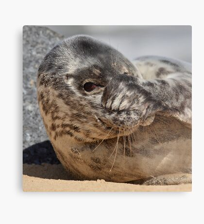 Peek-A-Boo Seal Metal Print
