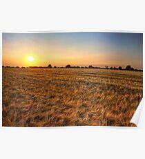 Summer Sunset, Essex. Poster