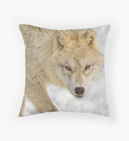 Cold Stare Throw Pillow