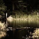 Nature's Glow by montserrat