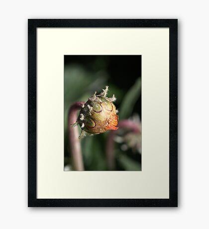 Daisy - Tasting Life  Framed Print