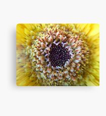 Macro Yellow Flower Center Canvas Print